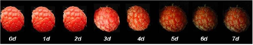 cadena de frío frutas