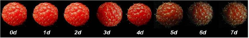 cadena de frio frutas