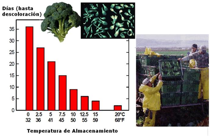 refrigeración verduras