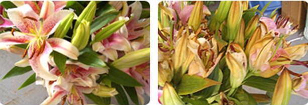 refrigeración flores