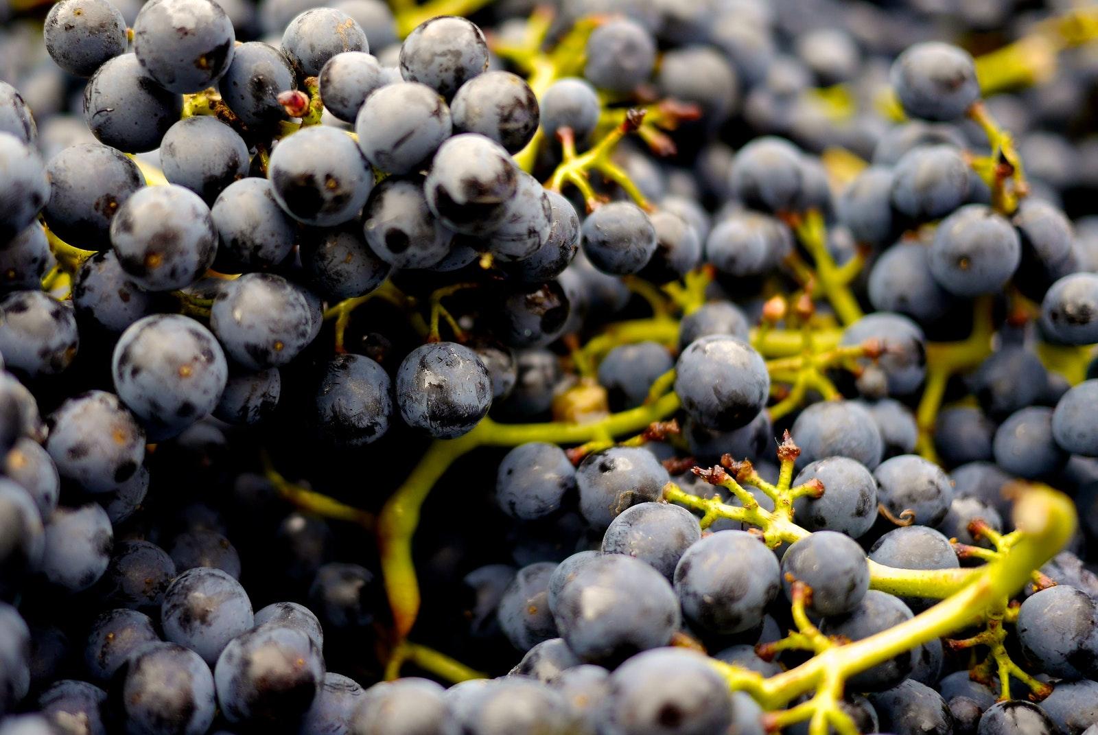 abundance-alcohol-berries-357742