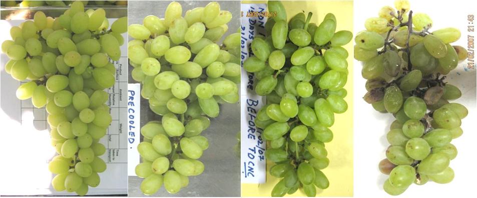 refrigeración frutas
